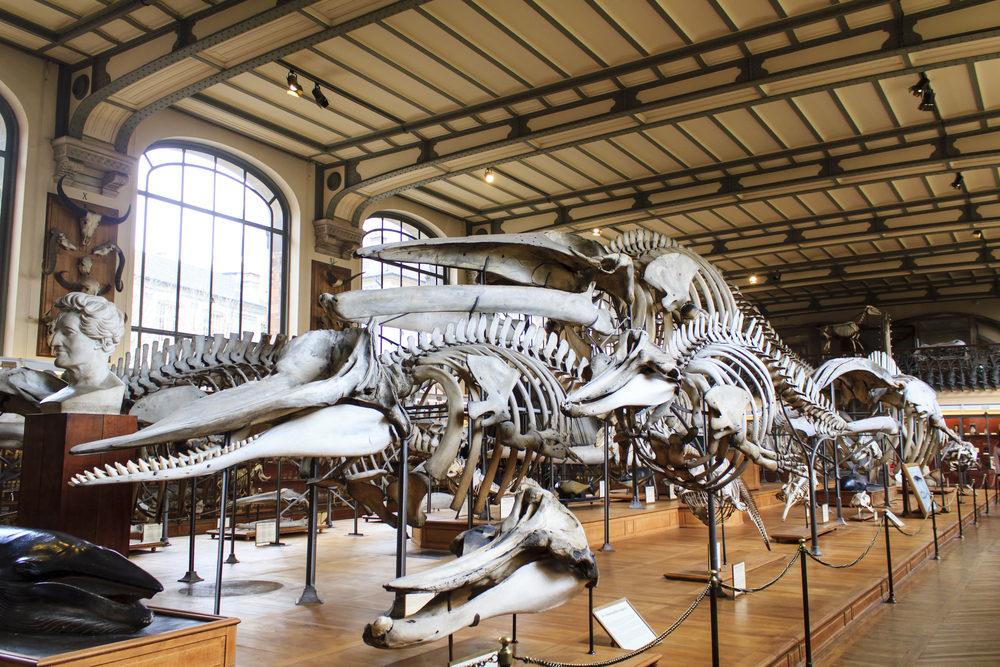 musee-histoire-naturell