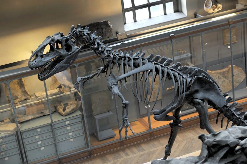 Musée-d-histoire-naturelle