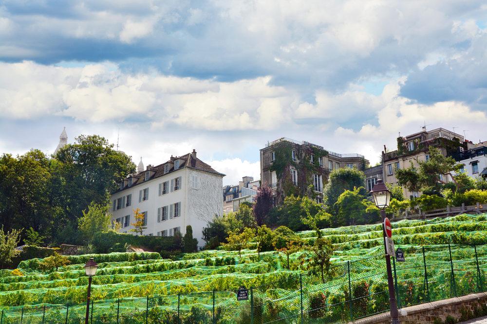 vignes-paris